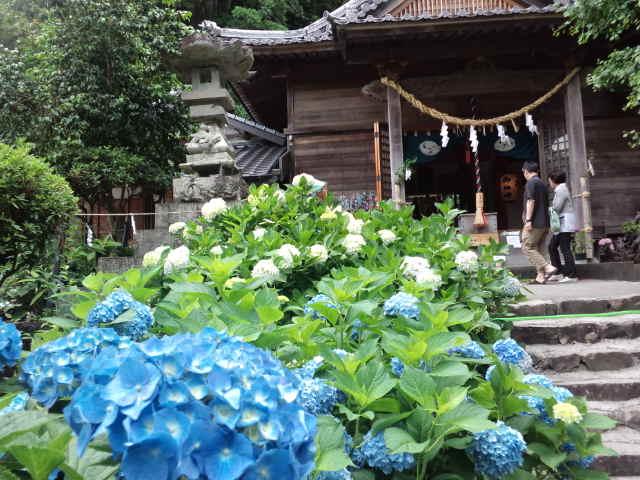 『春野西分のアジサイ神社』